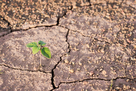 environmental issues: Green plant growing out of cracks in the earth Stock Photo