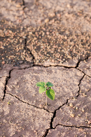 Green plant growing out of cracks in the earth Stock Photo