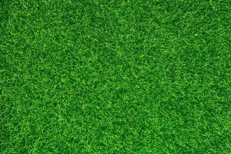Green grass texture background. Top view with copy space.