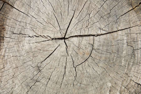 Stump of tree, cross section of a tree trunk
