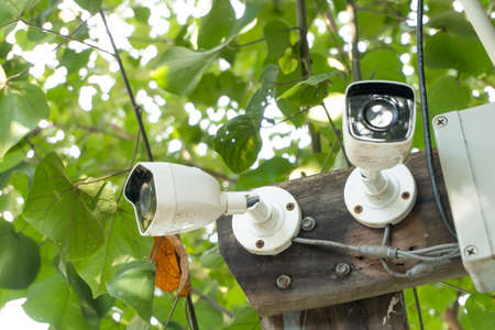 White CCTV installed on the tree which refer to harmony between technology and nature. CCTV hid on the tree to detect thief Standard-Bild