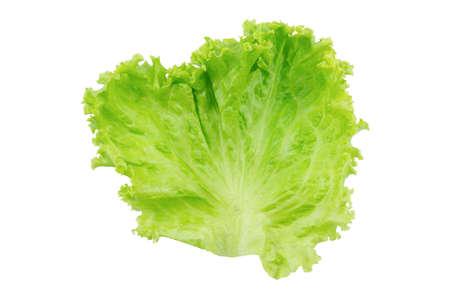 Lettuce. Salad leaf isolated on white background Фото со стока