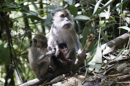 monkeys with his baby in the jungle in thailand