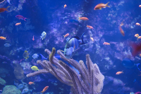 a doctor fish is swimmin in a fish tank in the zoo