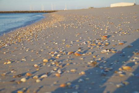 a lot of shells on the beach at the sea in summer