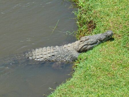 a crocodile is sleeping in the river Imagens