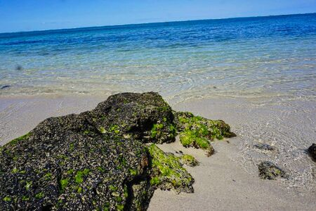 beach with moss and clear water at summer