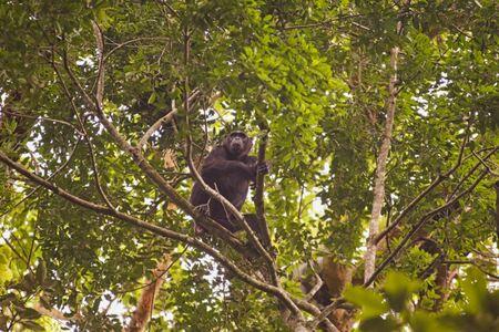 a monkey is sitting on a tree
