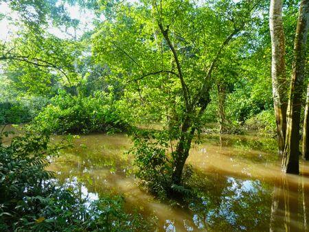 a pond in the grassland at summer 版權商用圖片