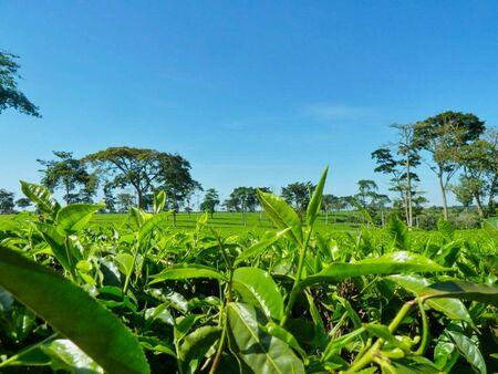 green plants on a field