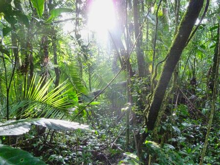 deep jungle with sunbeams on the ground