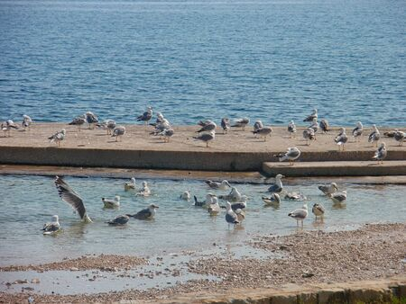 a group of seagulls at the beach in summer 스톡 콘텐츠 - 129718391