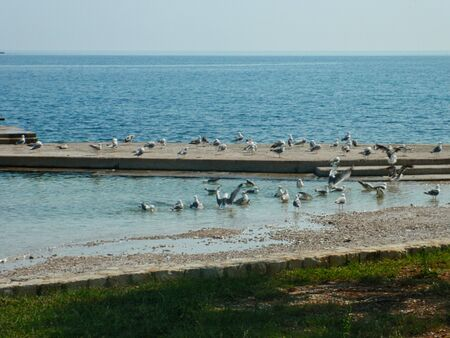 a group of seagulls at the beach in summer