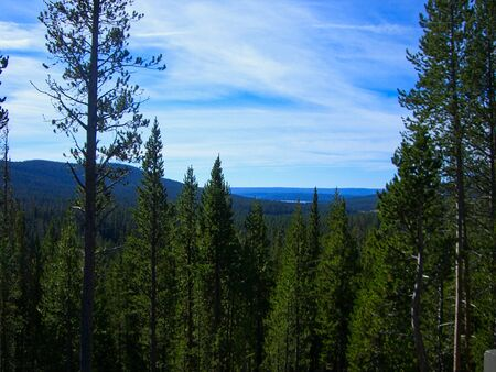 the green forest in the yellowstone park
