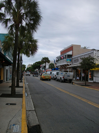 a street in miami with palms at summer