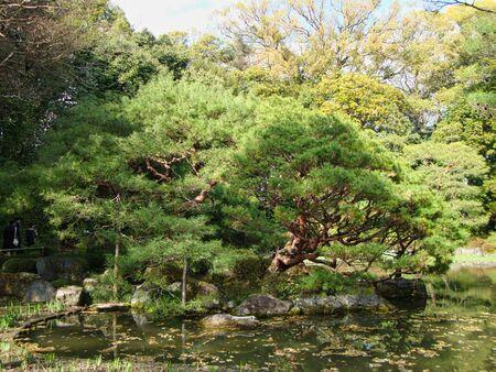a big bush in park in tokyo