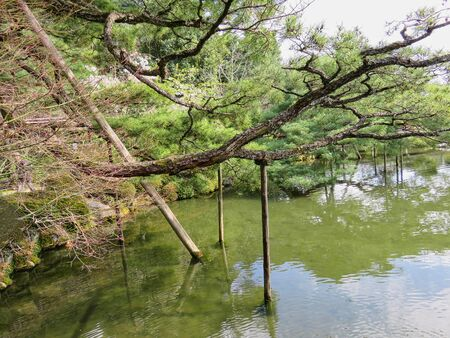 a tree on a pond in the park