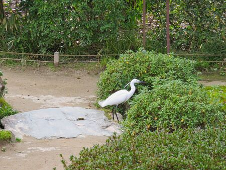 a heron is walking in a pond in a park