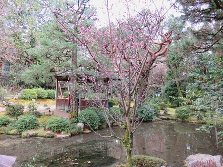a tree with red buds in a park in tokyo Banco de Imagens