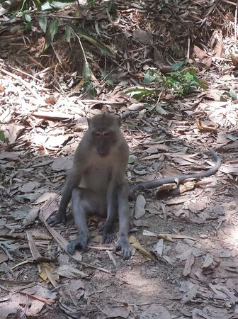 a monkey is sitting on the ground in the jungle