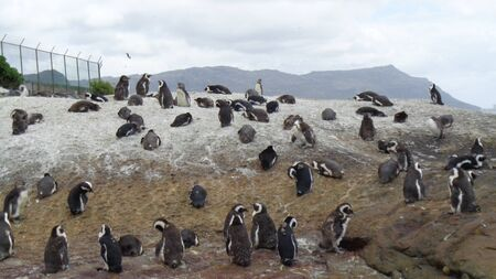 penguins on an island in wintertime