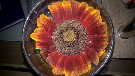 a sunflower in a big glas
