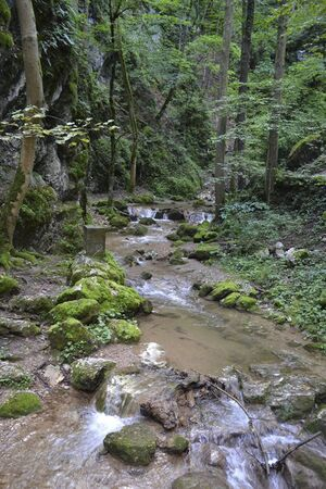 a river in the deep forest at summer 免版税图像