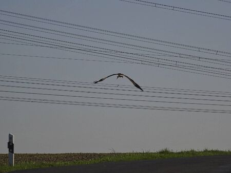 a bird is flying under the powerlines