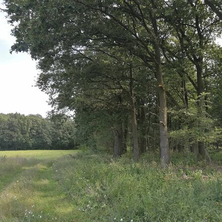 the green forest in the summertime with a field Reklamní fotografie