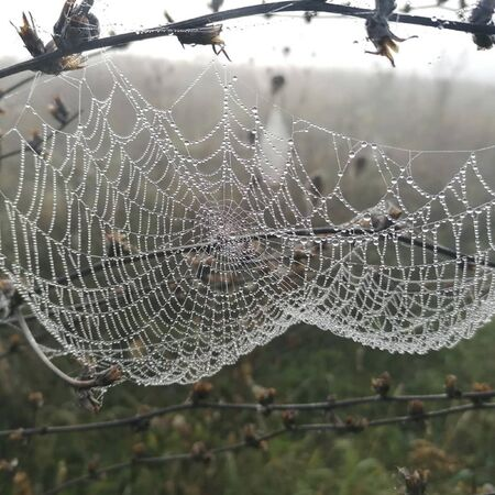 a spider web on a tree with water trops