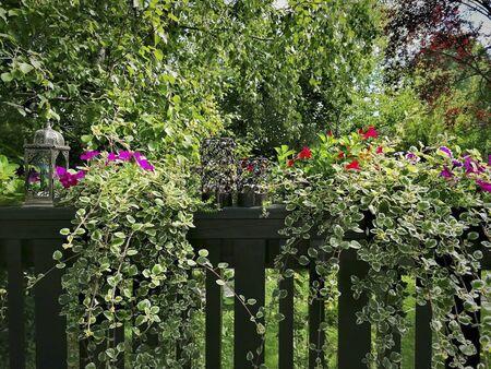 flowers in the garden at summertime Reklamní fotografie