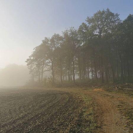 a path near the forest with smog Reklamní fotografie