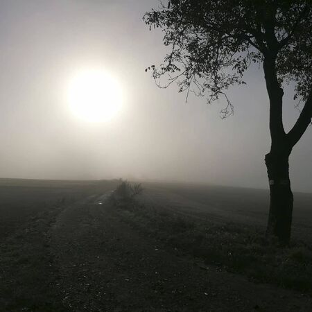 a tree in front of the fog at summer