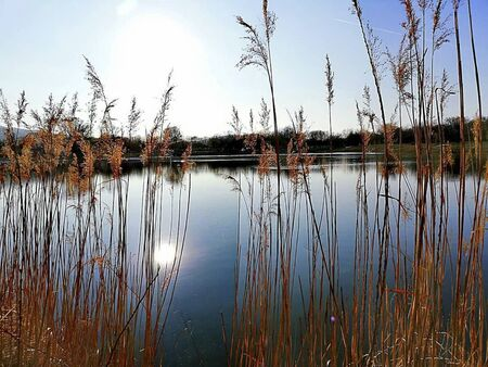 a pond with reed beside at summer