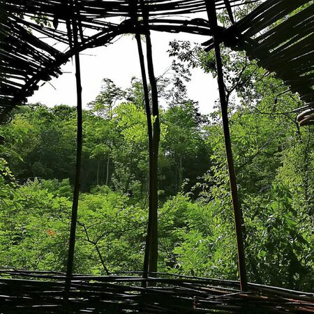 view trough the bamboos to the jungle at summer Reklamní fotografie