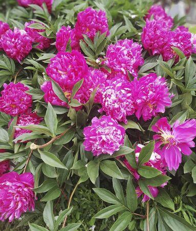 flowers in the garden in the summer