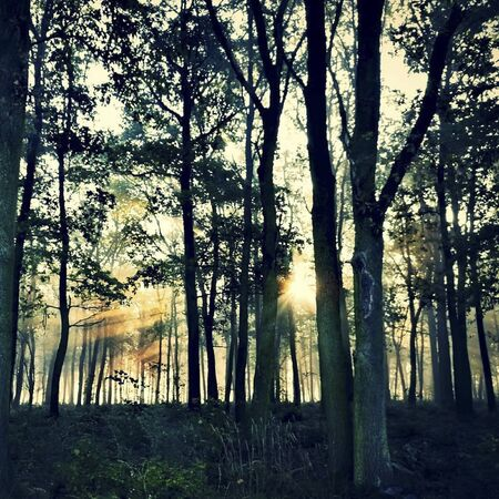sunflares in the forest at sunset
