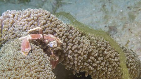 a fish is swimming on the ground between corals Stock fotó
