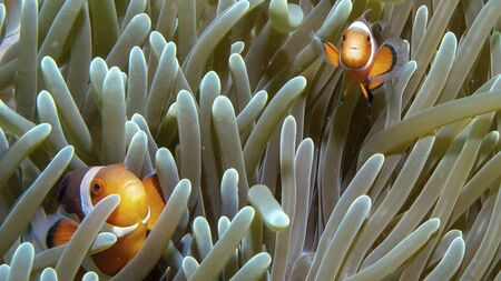 a fish is swimming on the ground between corals