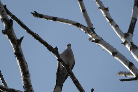a dove is sitting on a bench