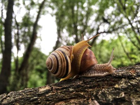 snails are climbing on their houses
