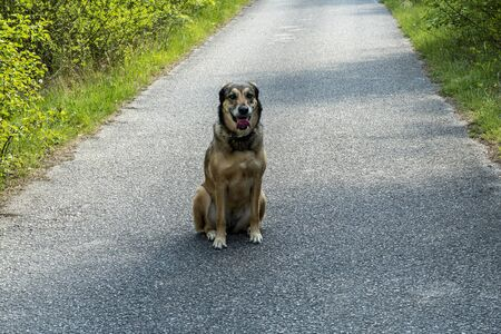 a dog is sitting on the street after a walk