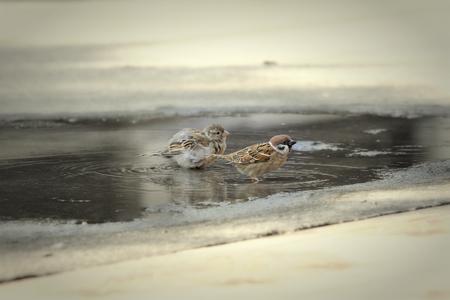 thirsty bird: bird in the water