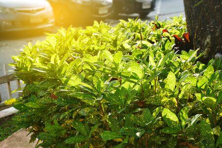 roseleaf: green bramble at twillight,selective focus,vintage filter