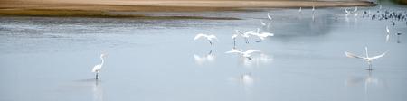 winter escape: Migratory birds in winter to escape.