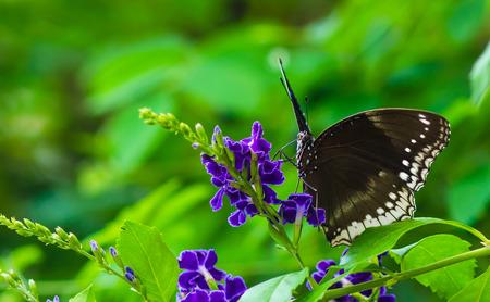 feeders: Butterflies on flowers are nectar feeders.