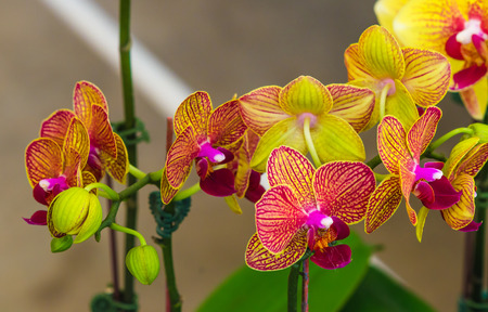 orchid: Beautiful orchid