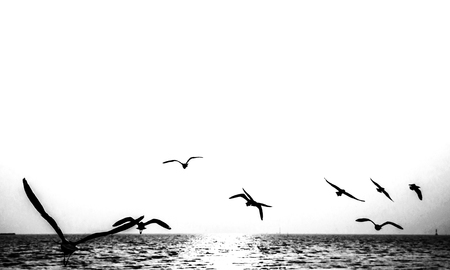 free background: Seagulls flying on the sea. Stock Photo