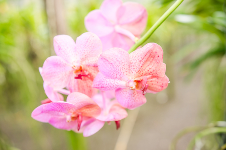HI: The beauty of the orchids in the garden hi key photo