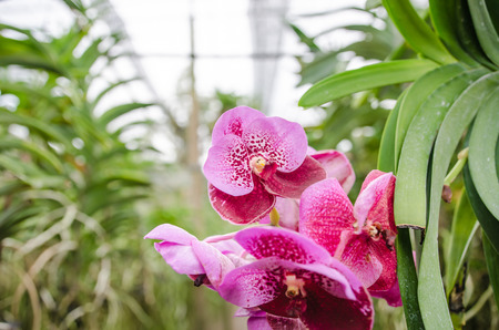 The beauty of the orchids in the garden hi key photo